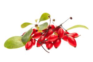 Berberitze Trockenfrüchte